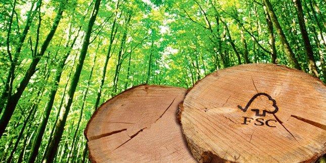 Quante sono le foreste eco-certificate in Italia?