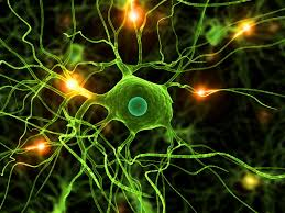 Parkinson nuove scoperte sul gene Pink1
