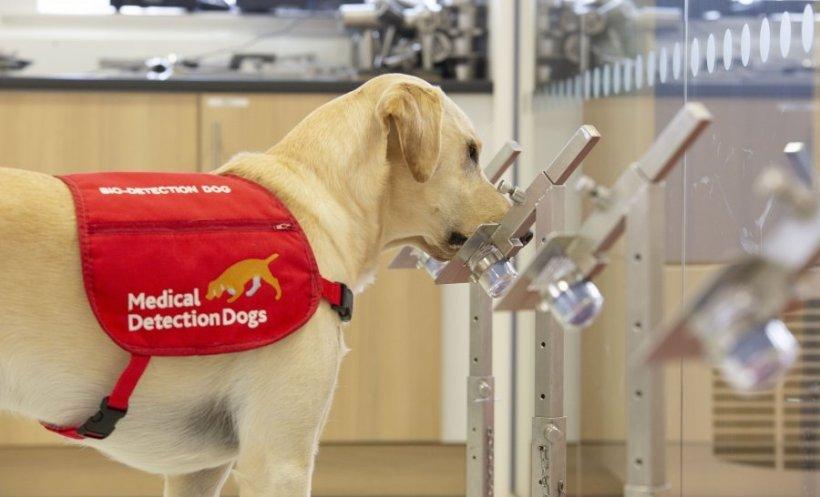 Cani che fiutano il Covid nelle urine e nella saliva
