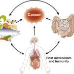 Novità sulle terapie oncologiche: virus dell'intestino ne potenzia l'effetto