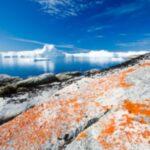 Il mercurio nel mare arriva anche dalla Groenlandia