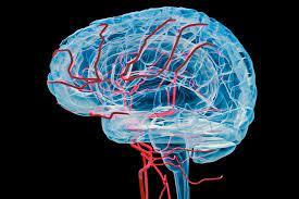 Alzheimer e angiogenesi: scoperto meccanismo che distrugge vasi sanguigni