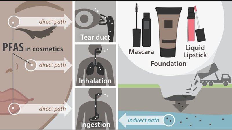 PFAS nei cosmetici: quali sono i rischi per la salute?