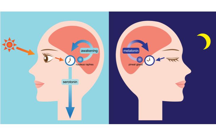 Meccanismo di regolazione del sonno influenzato anche da sistema immunitario