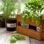 Alimenti contro Alzheimer basilico fenchol